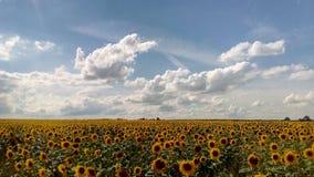 Natureza do horizonte do sol das nuvens das flores do céu fotos de stock royalty free