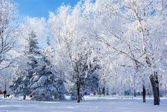 Natureza do inverno Fotos de Stock