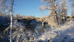 Natureza do inverno Imagem de Stock