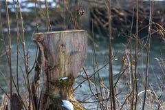 Natureza do inverno Imagens de Stock Royalty Free