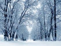 Natureza do inverno, aleia no parque Fotografia de Stock