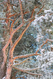 Natureza do inverno em um dia ensolarado Imagem de Stock