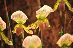 Natureza do jardim da flor da flor da orquídea bonita imagem de stock