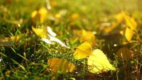 Natureza do jardim do outono video estoque
