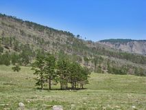 Natureza do Lago Baikal Floresta queimada no monte Imagem de Stock Royalty Free