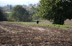 Natureza do outono Fotografia de Stock Royalty Free