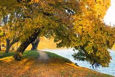 Natureza do outono Foto de Stock