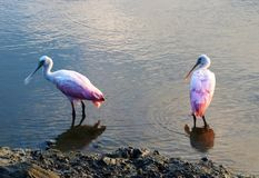 Natureza do parque estadual do Huntington Beach Fotos de Stock