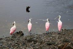 Natureza do parque estadual do Huntington Beach Fotografia de Stock