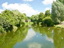 Natureza do rio fotografia de stock