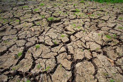 Natureza do solo seco após primeiramente chover Fotografia de Stock Royalty Free