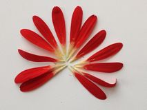 Natureza do verão da flor Fotos de Stock Royalty Free