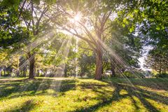 Natureza durante um dia morno Fotografia de Stock Royalty Free