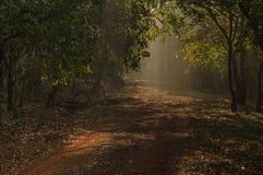 Natureza e caminhos fotos de stock