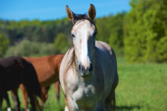 Natureza e cavalo Foto de Stock