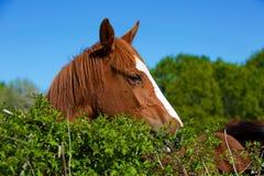 Natureza e cavalo Fotografia de Stock Royalty Free
