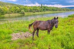 Natureza e cavalo idílico fotografia de stock