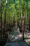 Natureza e Forest Klaeng da floresta dos manguezais em Rayong, Tailândia Fotos de Stock