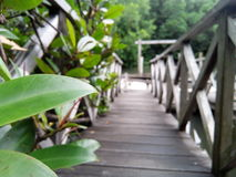 Natureza e ponte imagens de stock