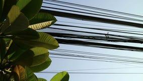 Natureza e tecnologia, de árvore do Plumeria folhas e linhas elétricas elétricas filme