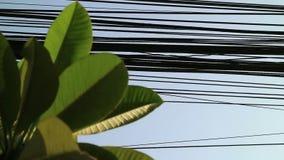 Natureza e tecnologia, de árvore do Plumeria folhas e linhas elétricas elétricas video estoque