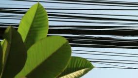 Natureza e tecnologia, de árvore do Plumeria folhas e linhas elétricas elétricas vídeos de arquivo