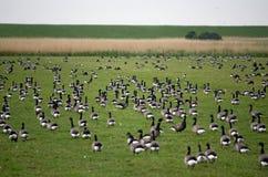 Natureza em Ameland Fotos de Stock