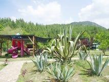 Natureza em Antalya Fotos de Stock Royalty Free
