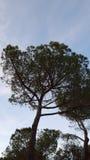 Natureza em montanhas dos pyrinees fotos de stock royalty free