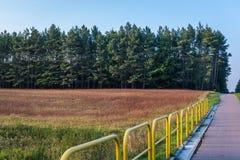 Natureza em Poland Imagens de Stock