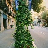 Natureza em sua porta Foto de Stock