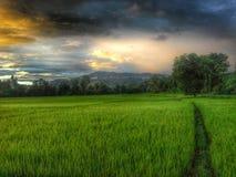 Natureza em Tailândia imagens de stock royalty free