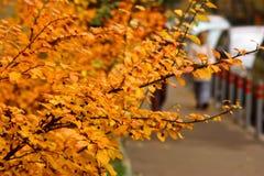 Natureza em toda sua beleza fotografia de stock royalty free