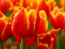 Natureza em toda sua beleza 9 fotografia de stock royalty free