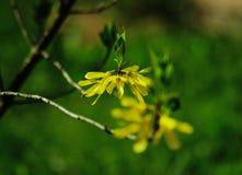 Natureza em toda sua beleza 24 foto de stock