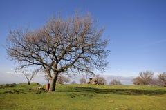 Natureza em Tuscolo Imagem de Stock Royalty Free