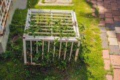 Natureza em uma gaiola Ccage com plantas fechados imagem de stock