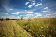 A natureza em umas horas de verão Imagem de Stock