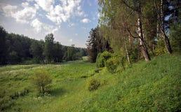 A natureza em umas horas de verão Foto de Stock