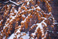 Natureza encerrada no gelo após uma tempestade Foto de Stock Royalty Free