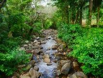 Natureza escondida Imagem de Stock Royalty Free