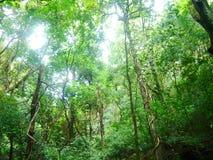Natureza escondida Foto de Stock