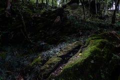 Natureza escura abstrata Fotografia de Stock