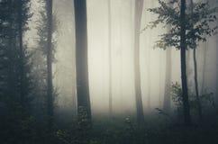 Natureza escura da floresta com névoa Imagem de Stock Royalty Free