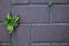 A natureza está vindo à cidade grande Foto de Stock