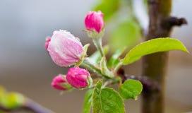 A natureza felicita-nos com o início da mola estes bonitos fotografia de stock royalty free