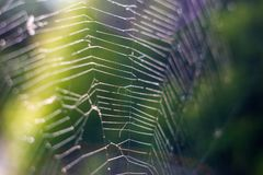 A natureza, fim acima de uma Web de aranha com orvalho deixa cair o movimento lento fotografia de stock royalty free