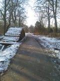 Natureza fresca fria do firstsnow da neve Imagens de Stock