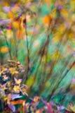 Natureza iluminada Imagens de Stock