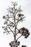 Natureza inoperante, árvore seca velha em um fundo branco Imagens de Stock